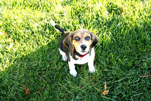 Roscoe ~ November 13, 2012   DogPerDay