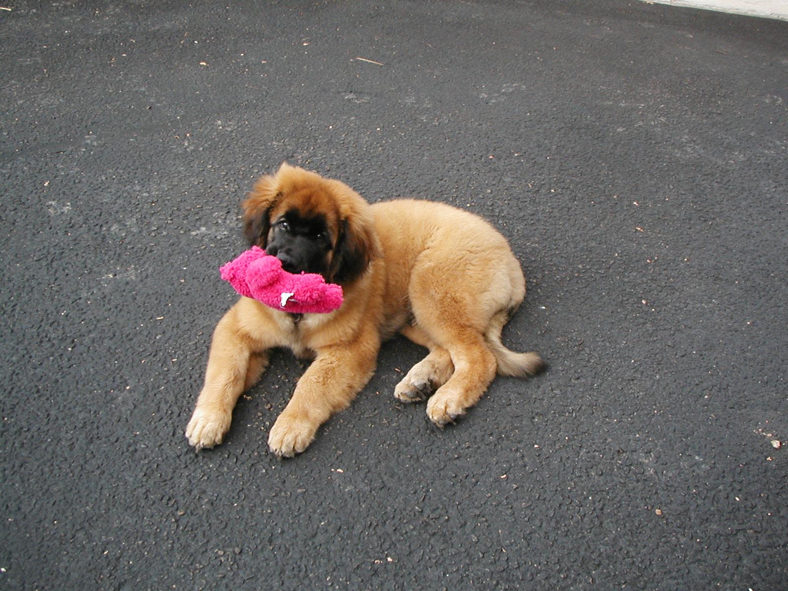 Sophie ~ November 15, 2012   DogPerDay